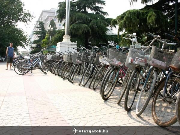 A rengeteg bicikli
