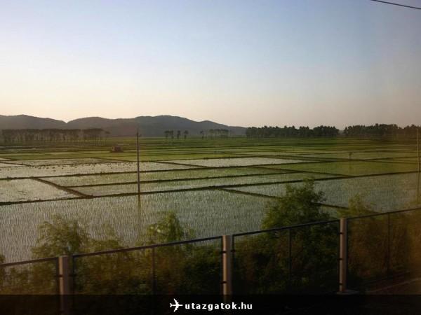 Rizsföldek Kinában